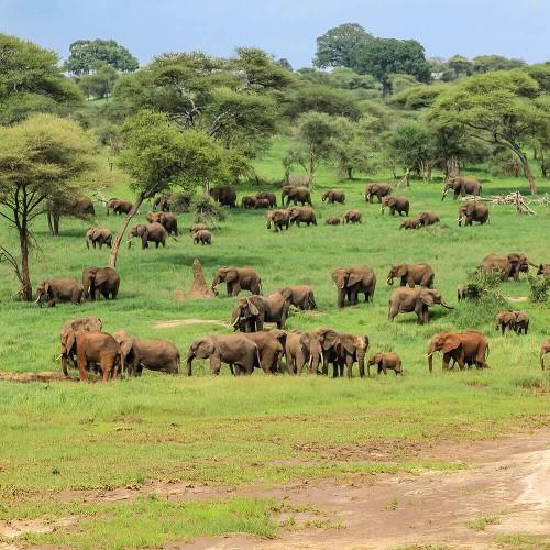 Narodni park Tarangire
