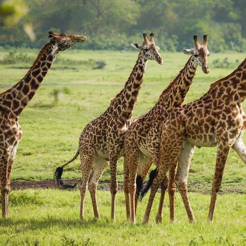 Narodni park Arusha