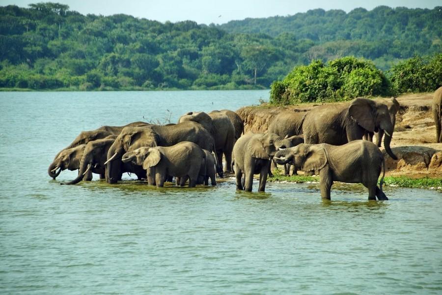 Восьмидневное сафари в основных местах Уганды