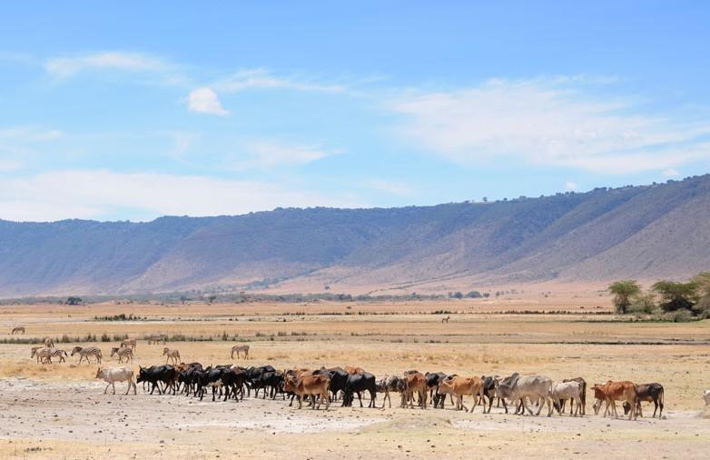 Кратер Олмоти - Горная местность Кратера Нгоронгоро