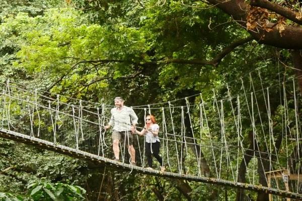 Прогулка по верхушкам деревьев