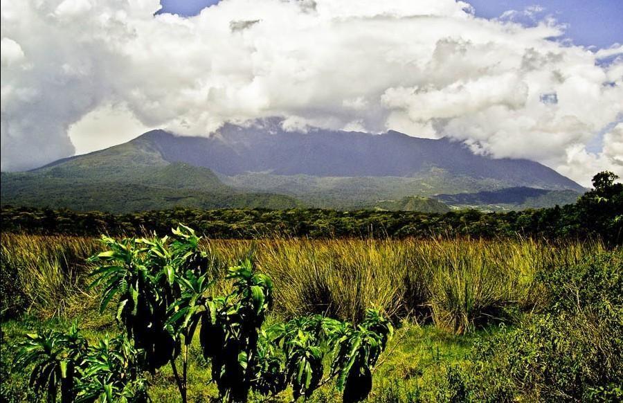 Safari to Arusha National Park