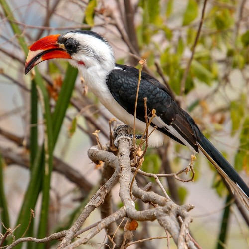 Сафари в Национальных Парках Озеро Маньяра, Нгоронгоро и Тарангире - 3 Дня