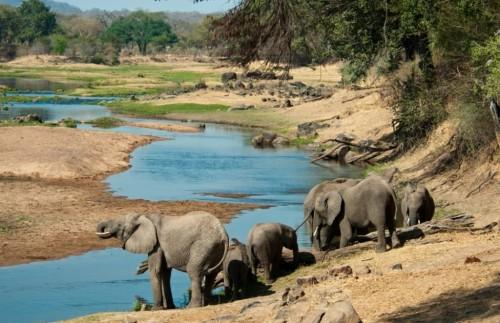 Восьмидневное кенийское сафари