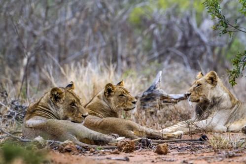 Лучшее девятидневное сафари в Зимбабве