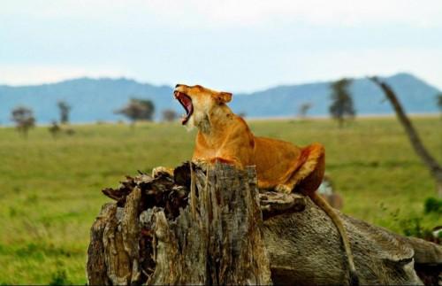 Сафари в Парке Озеро Маньяра и Кратере Нгоронгоро - 2 Дня