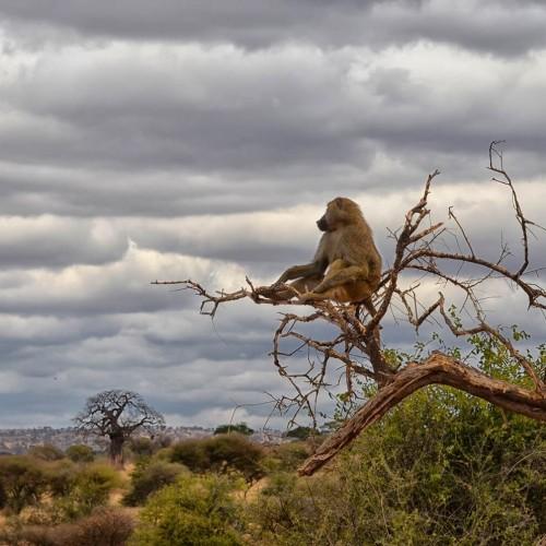 Сафари из Занзибара - Тарангире и Маньяра - 2 Дня