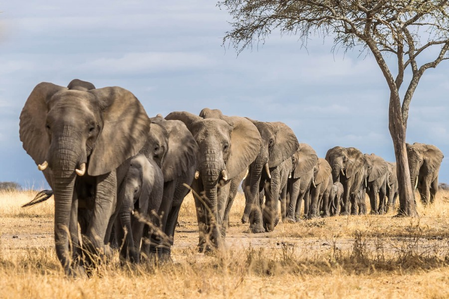 Safari from Zanzibar - Elephants & Baobabs in Tarangire - Two Days