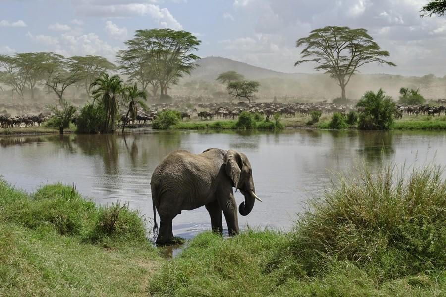 Acht dagen een complete Noord Tanzania Safari