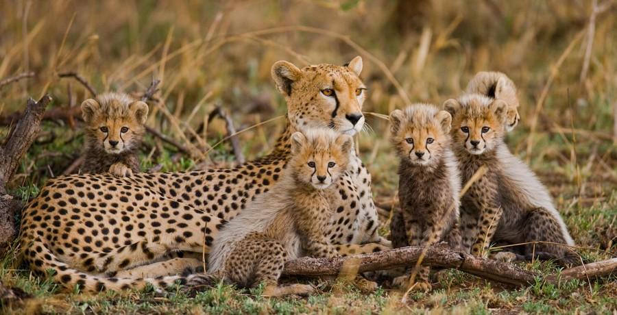 Safari from Zanzibar - Serengeti Safari - Five Days