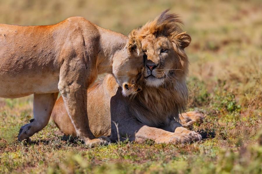 One Day Safari to Ngorongoro Conservation Area