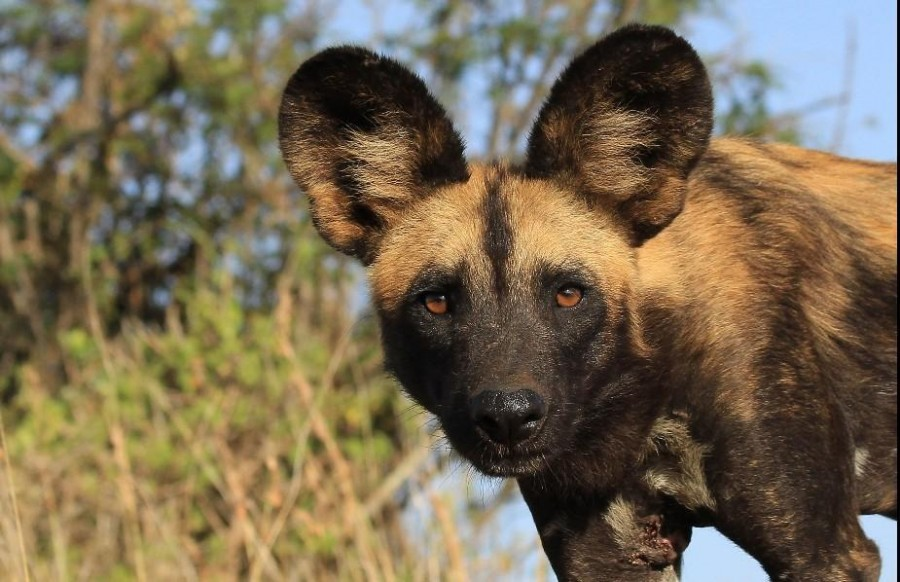 The Complete Southern Tanzania - 12 Day Flying Safari