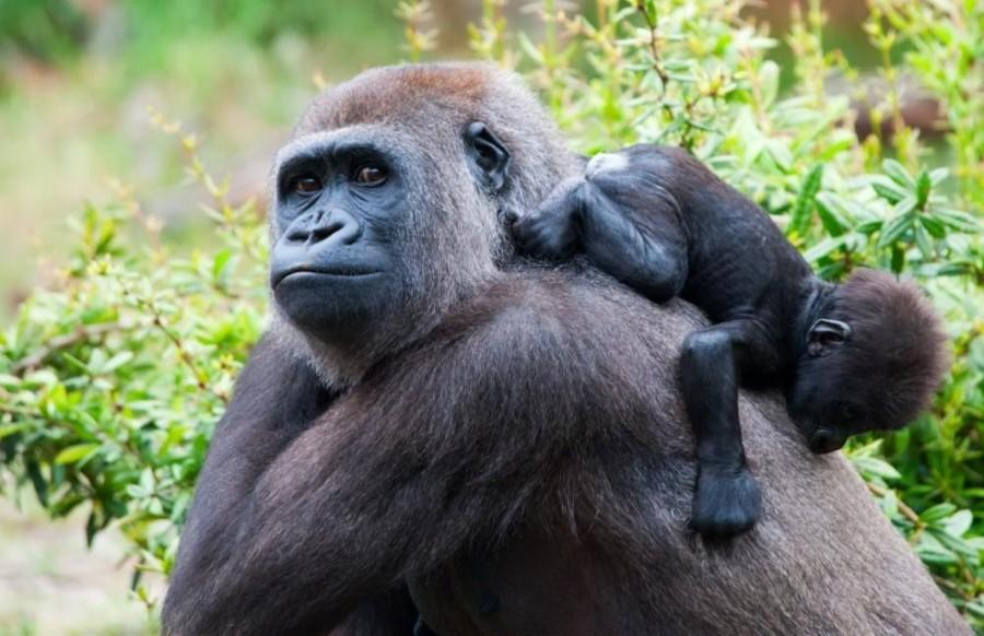 UGANDA Mgahinga Gorillas & Culture Safari from Kigali