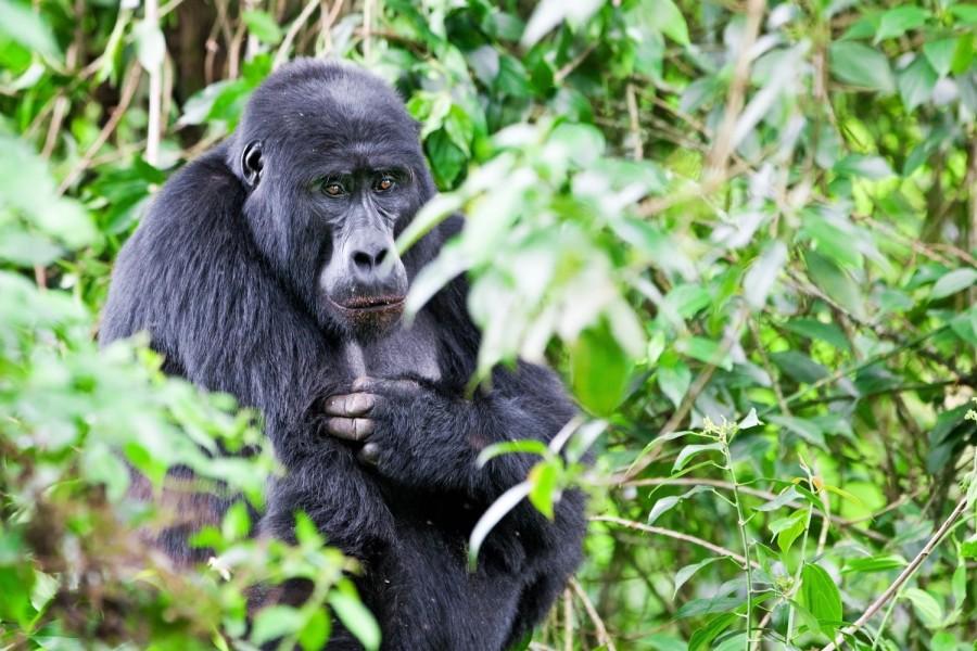 Nine Day Safari East Africa All in One: Rwanda, Kenya, and Tanzania
