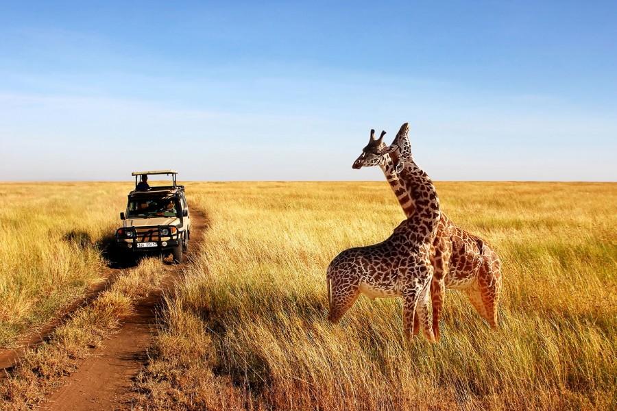 Six Day Tanzania Culture and Wildlife Safari