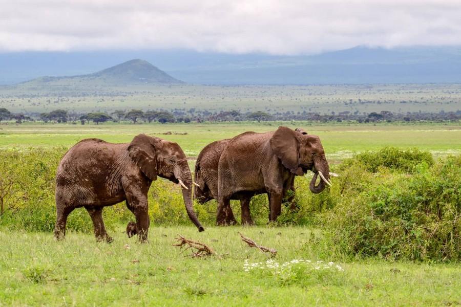 Safari from Mombasa - One Day Trip to Tsavo WEST