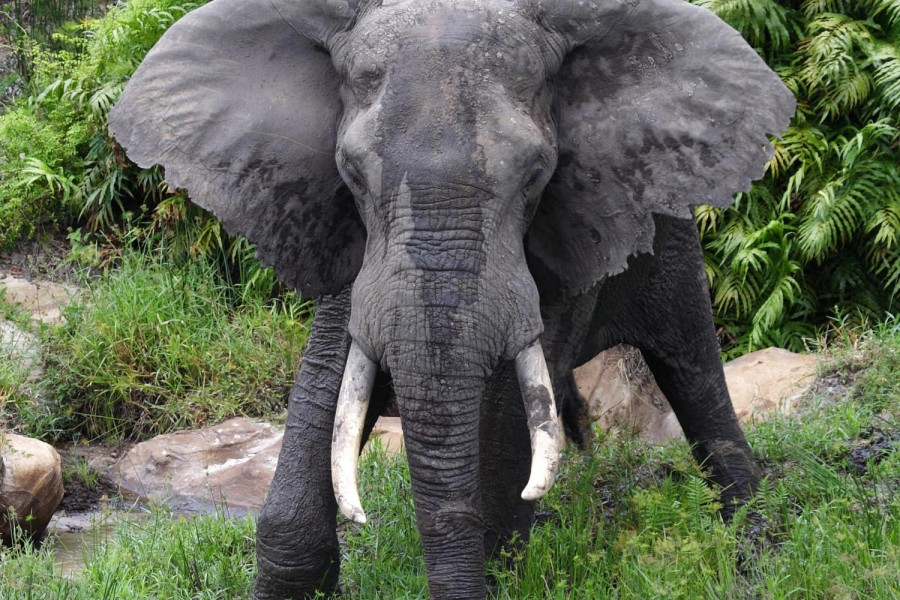 Safari from Mombasa - One Day Trip to Shimba Hills