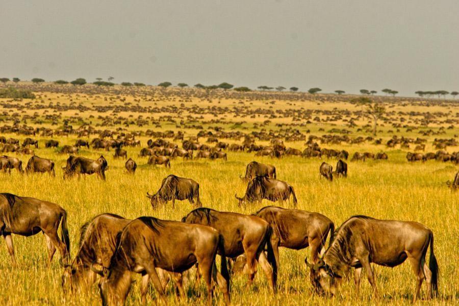 Vijfdaagse Wildebeest Grote Migratie Groene Seizoen Safari (april en mei)