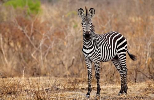 Karibu Selous - 7 Day Southern Tanzania Safari