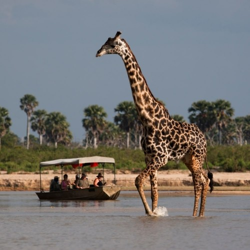 Safari from Zanzibar - A night in Selous - Two Days