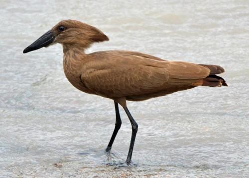 Bird watching in Kilombero Flood Plain