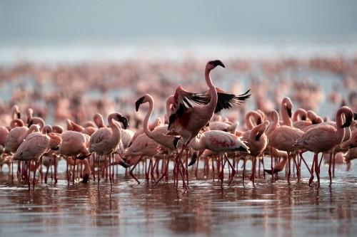 Lake Bogoria National Reserve