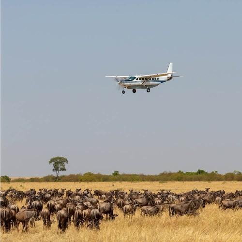 Wildebeest migration safari tours