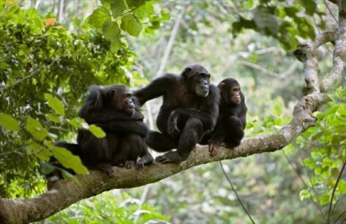 Chimpansee-trek tocht in Gombe - 5 dagen tour