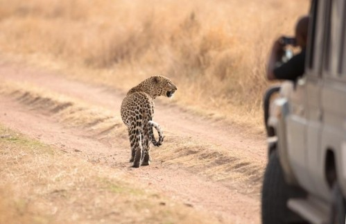 Safari from Zanzibar - Five Day Migration Safari