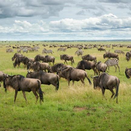 Safari from Zanzibar - Serengeti Fly-in & Fly-Out - Three Days