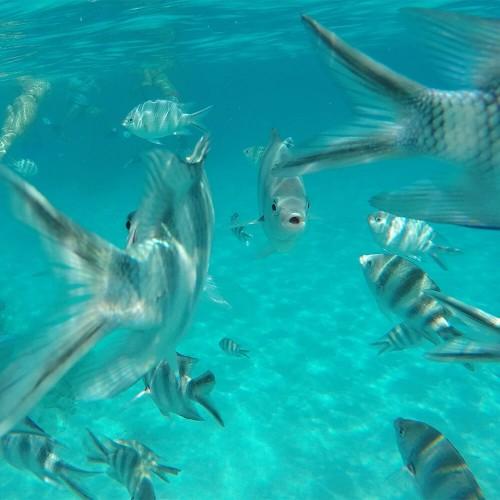 Mnemba island snorkelling experience
