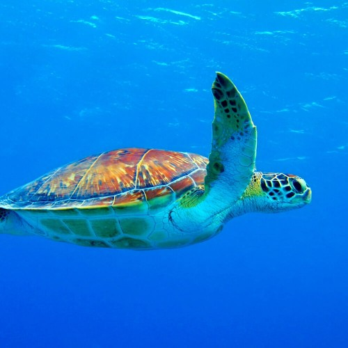 Nungwi natural aquarium & Mnarani marine turtles conservation pond