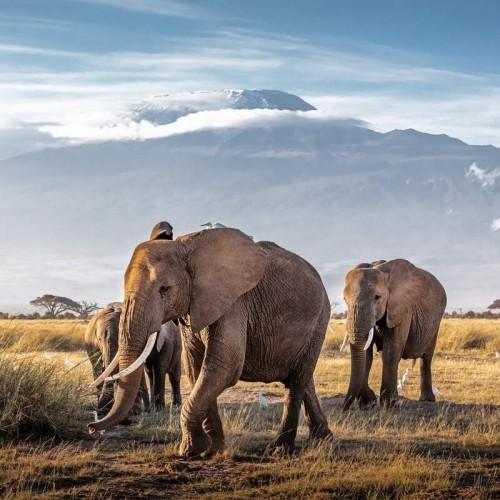 Safari from Mombasa - Tsavo East, Tsavo West and Amboseli National Parks - Five Days