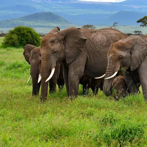 Five day safari in Tsavo East Tsavo West and Amboseli National Parks