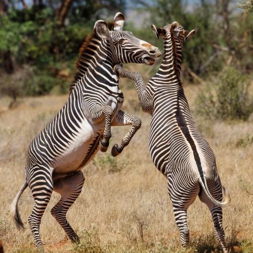 Samburu National Reserve - Two-day trip from Nairobi