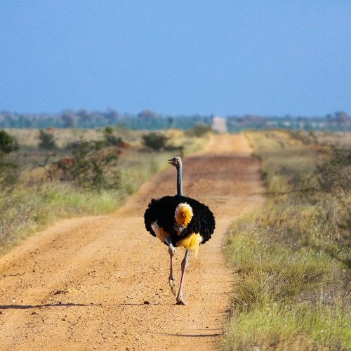 Three days in Tsavo East National Park