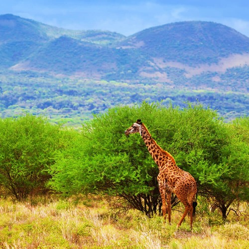 Three day safari in Tsavo East and Tsavo West National Parks