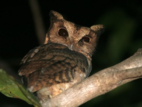 Bird watching in Eastern Arc Mountains