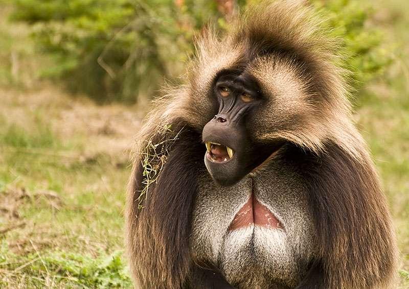 Ethiopia Wildlife