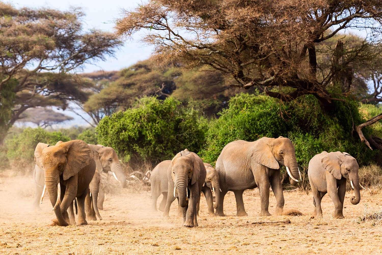 Kenya Amboseli elephant