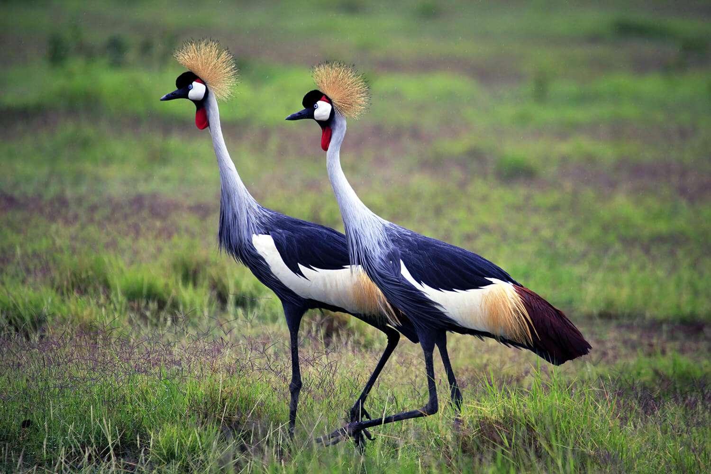 Kenya Amboseli birds