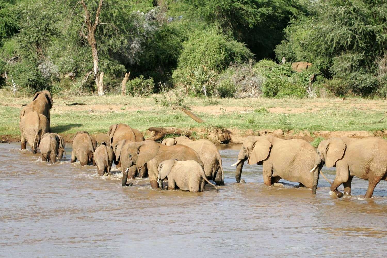The Buffalo Spring Reserve Elephants