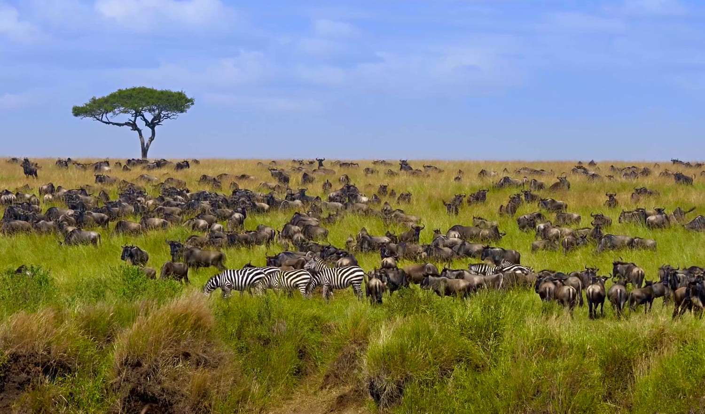 Kenya Masai Mara grass