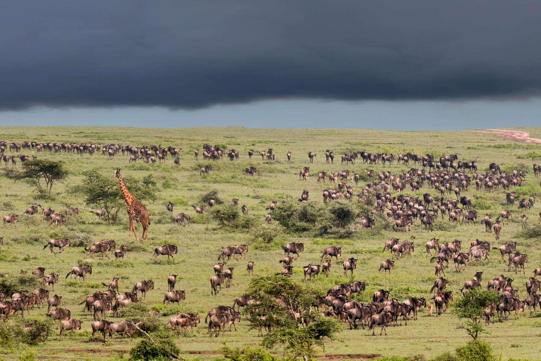 Kenya Masai Mara wildebeest migration