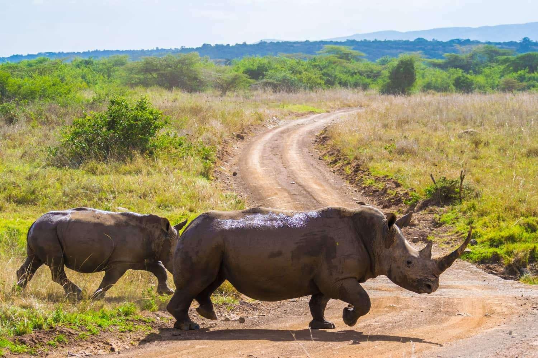 Kenya Nairobi National Park
