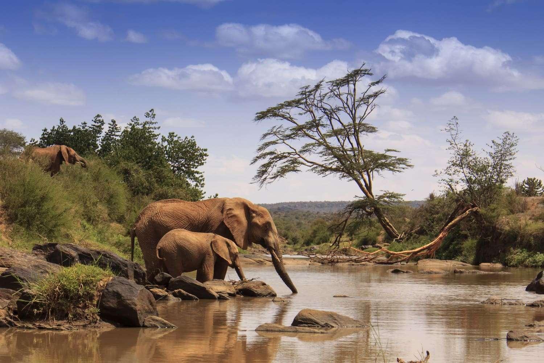 Kenya Samburu National Reserve Elephants