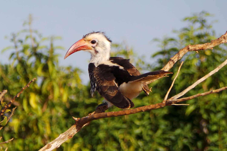 Kenya Tsavo East Bird