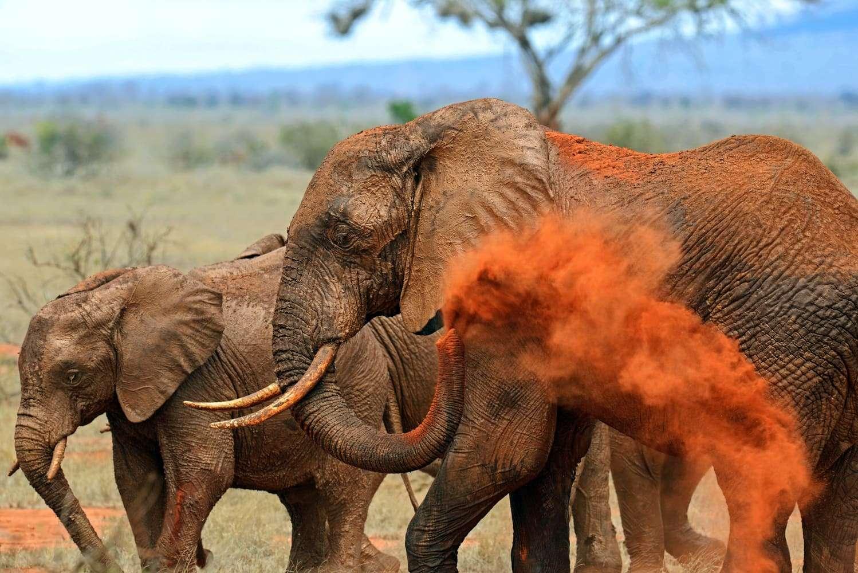 Kenya East Tsavo Elephants