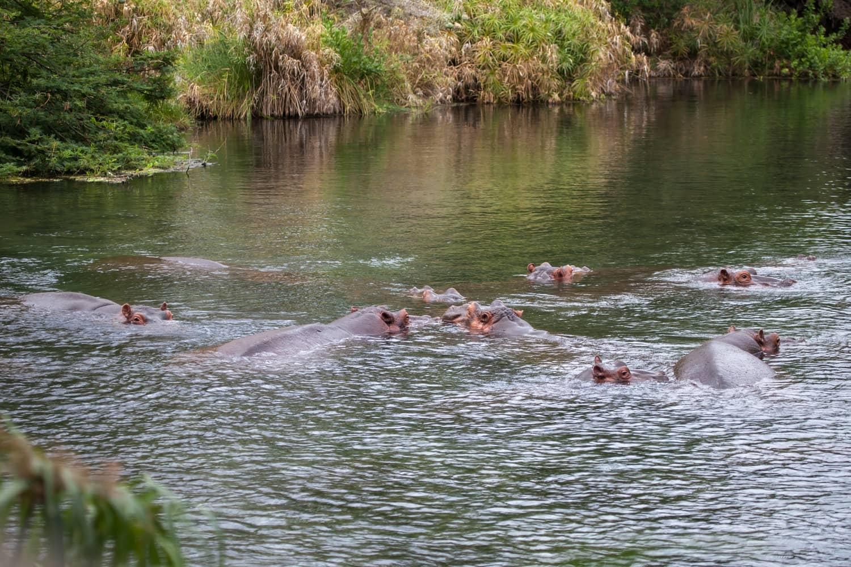 Kenya Tsavo West Mzima springs