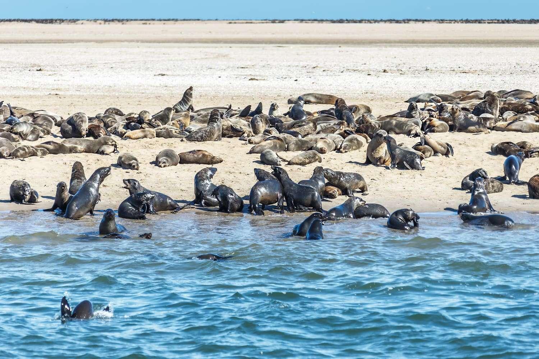 Walvis_Bay_Namibia_seals_colony